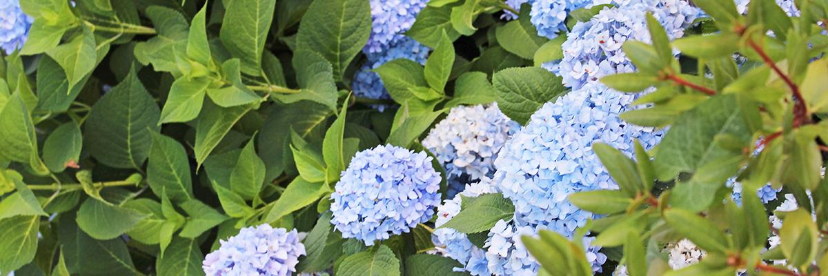Header_Flowers_1200x400_72dpi